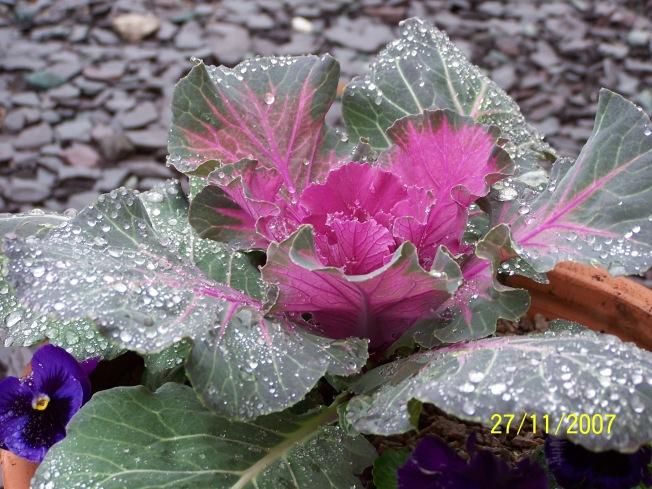 Raindrops on kale-4