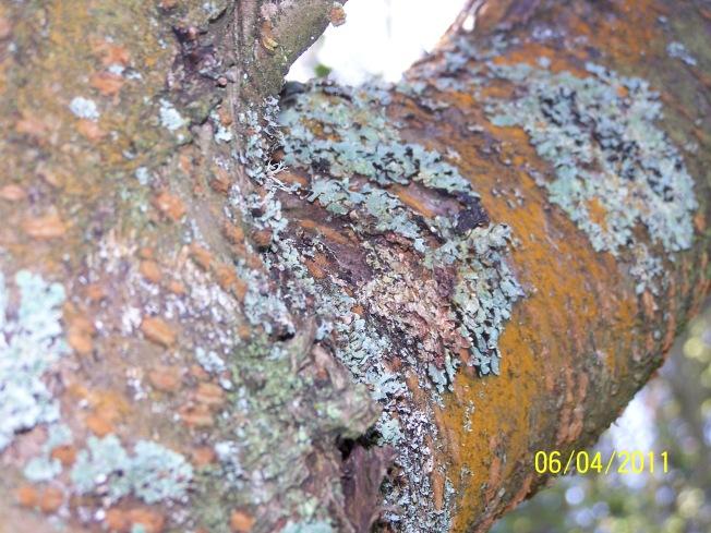 More lichen (3)