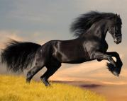download-arabian-horses-wallpaper-arab-horse