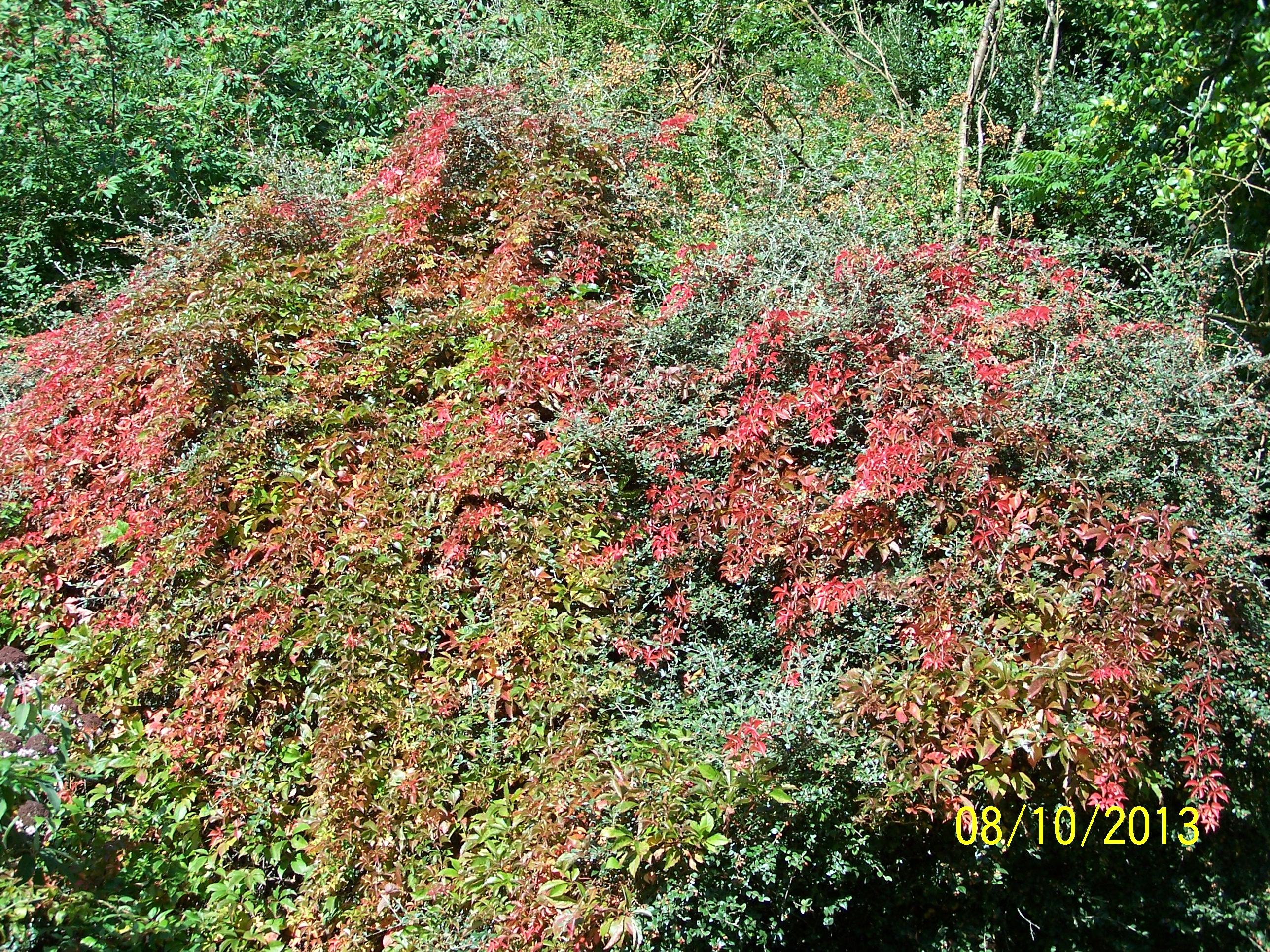 Autumn leaves @ Highdown
