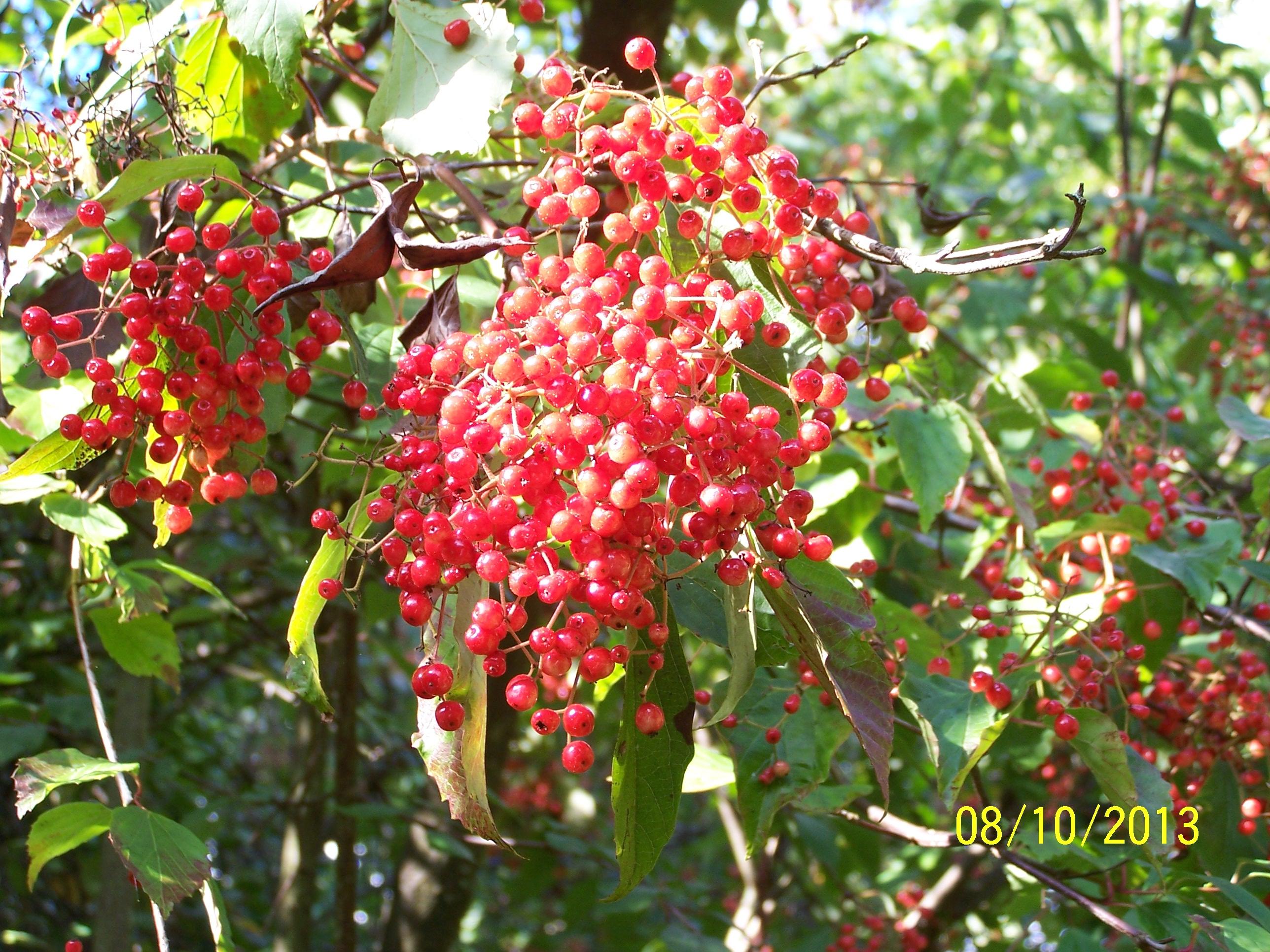 Berries @ Highdown (14)