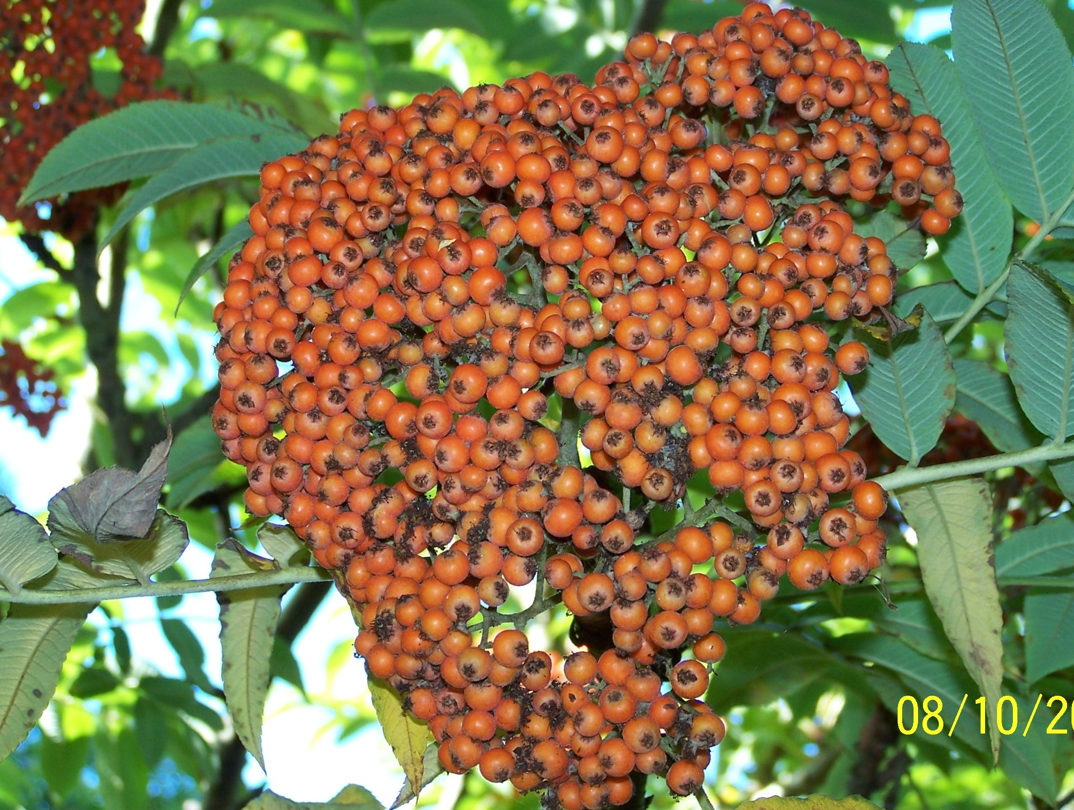 Berries @ Highdown (9)