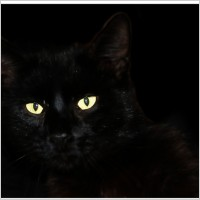 cat_black_cat_pet_214496